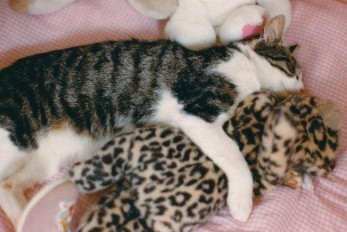 cat sleeping with leopard stuffed animal