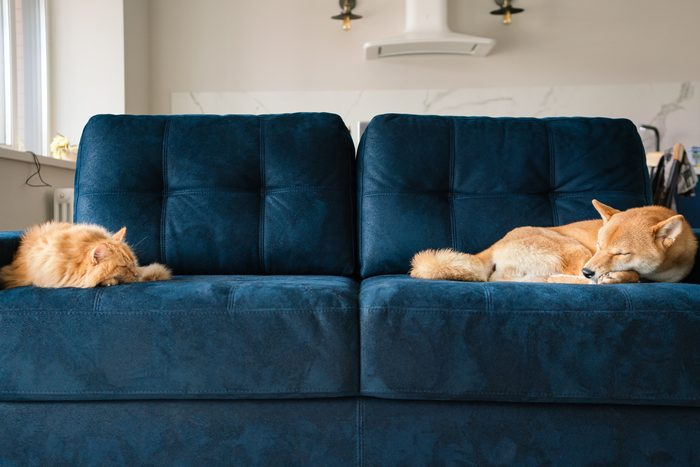 cat and dog sleeping on opposite sides of a couch