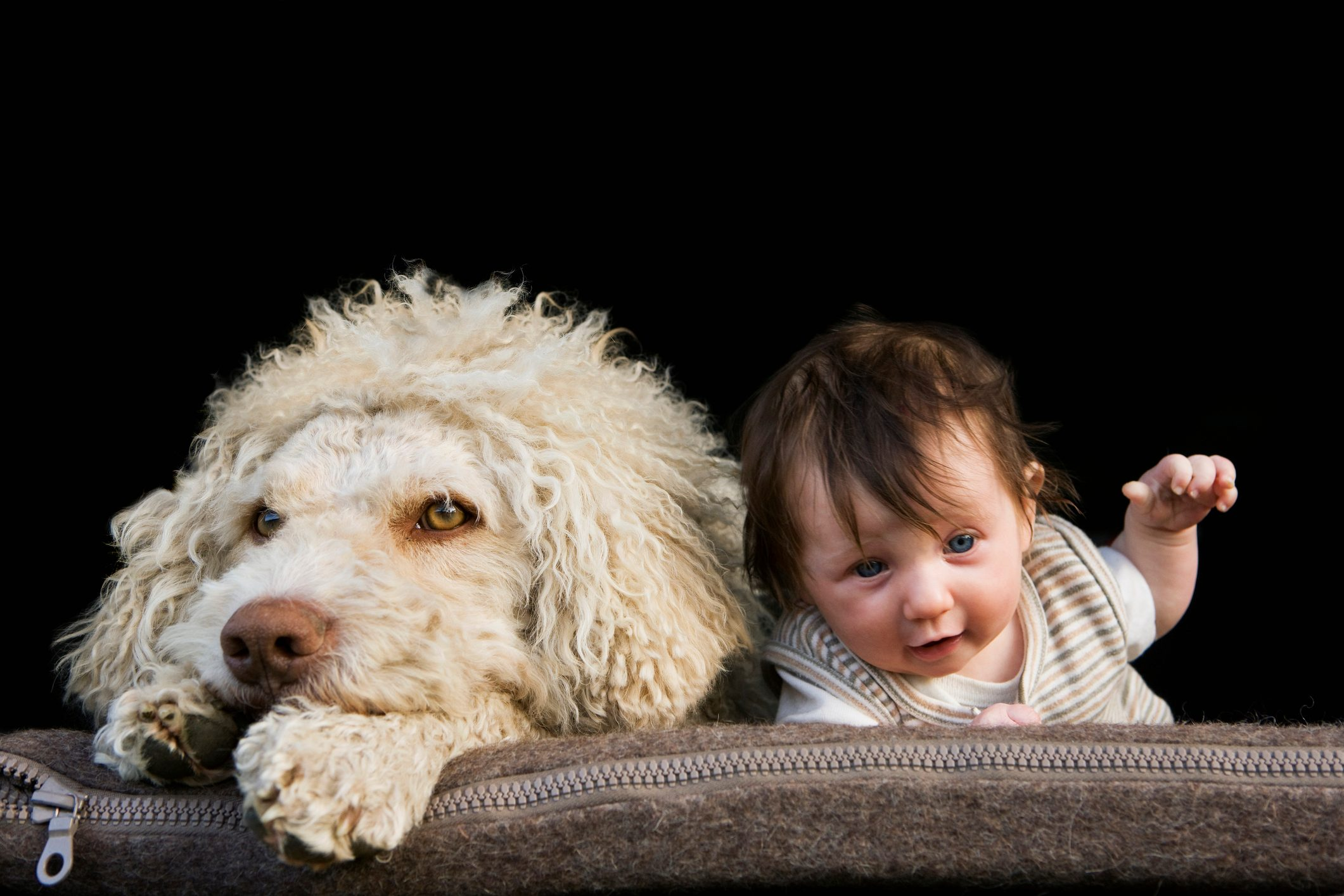 A dog and baby lying on their stomachs side by side
