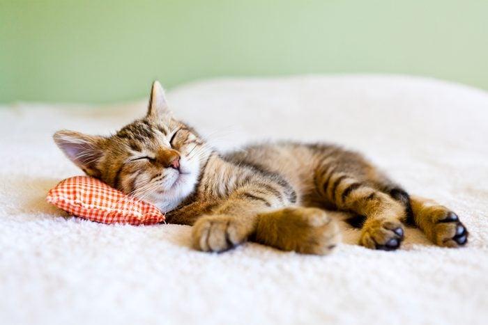 kitten sleeping on pillow