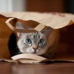 "Where Does the Phrase ""Let the Cat Out of the Bag"" Come From?"