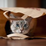 """Where Does the Phrase """"Let the Cat Out of the Bag"""" Come From?"""
