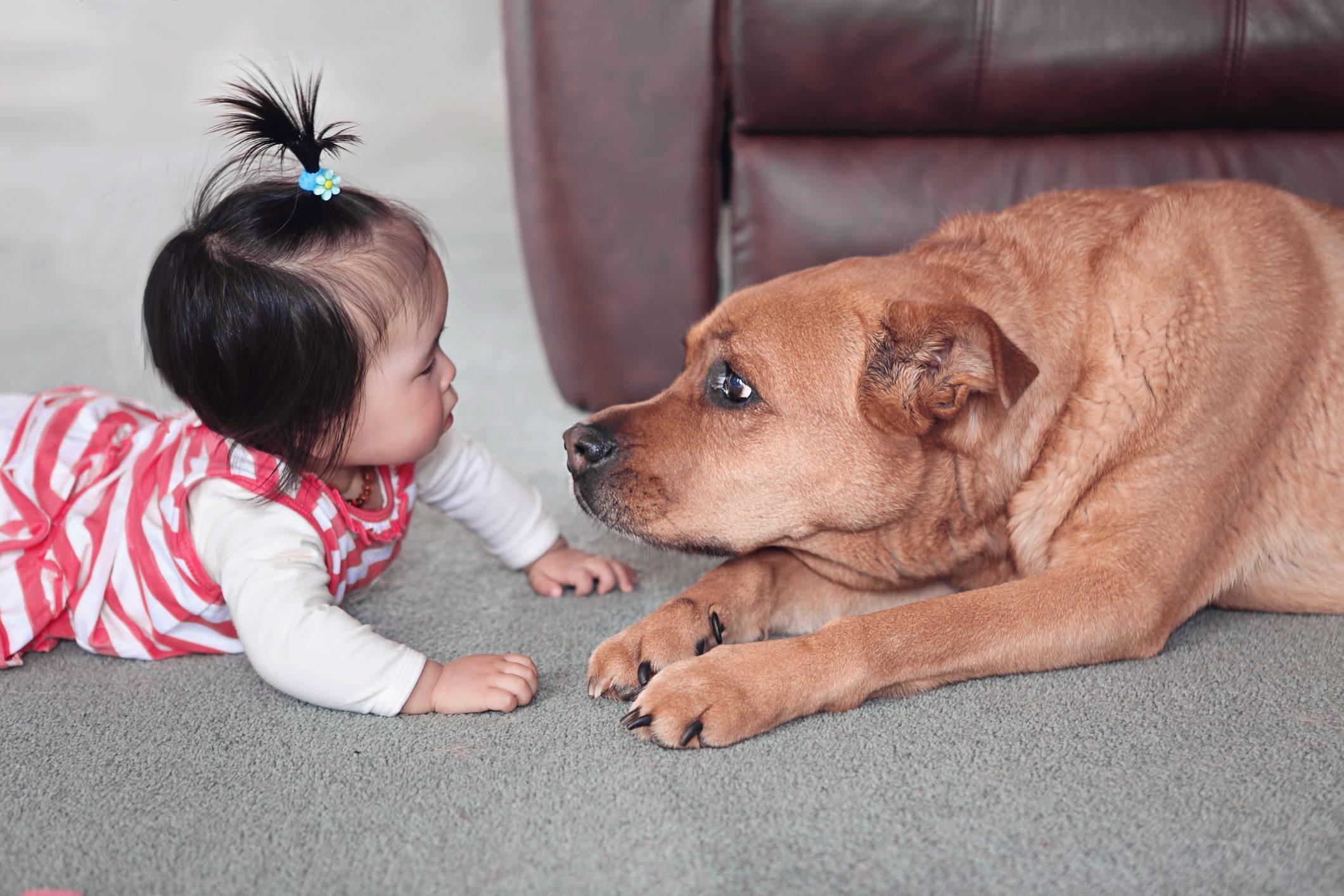 Baby girl on floor with gentle big pet dog