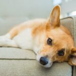 10 Signs Your Dog Wants Some Alone Time