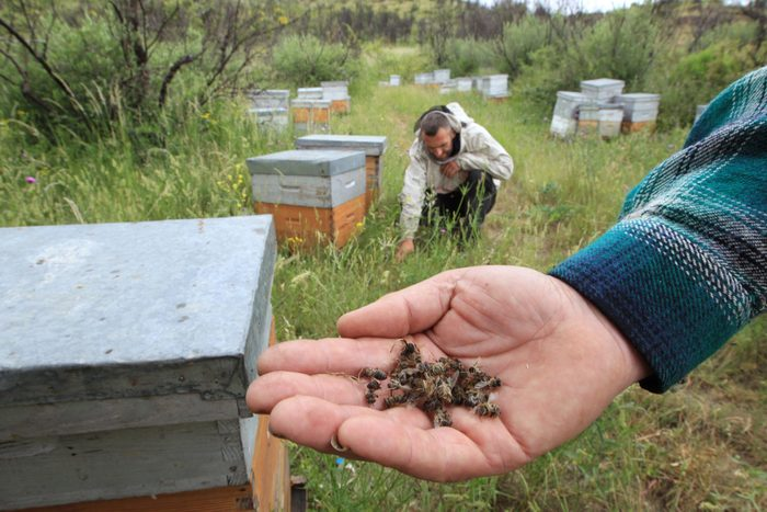 FRANCE-ENVIRONMENT-AGRICULTURE-BEES-POLLUTION