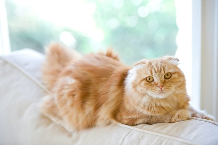 Orange Cat On A White Couch