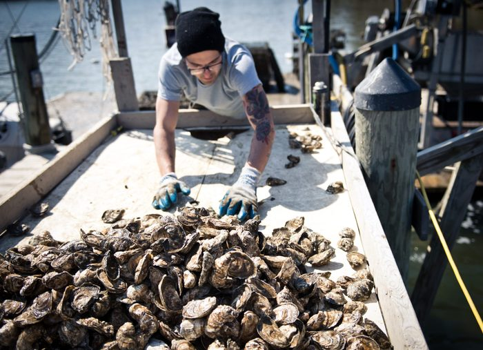 US-ENVIRONMENT-GASTRONOMY-OYSTERS