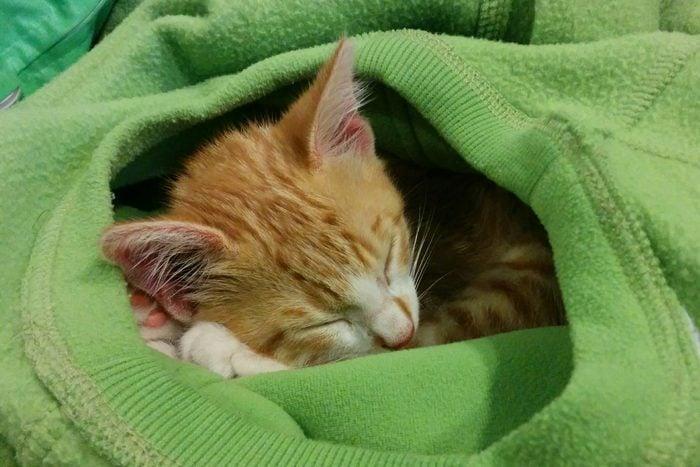 kitten snuggling in green sweater
