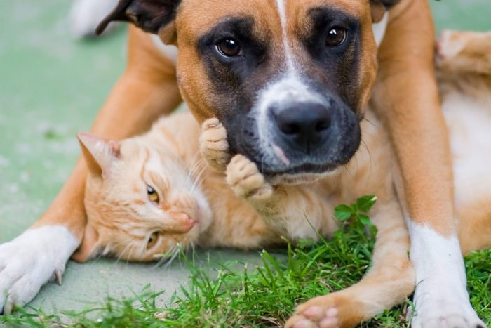 dog standing over cat