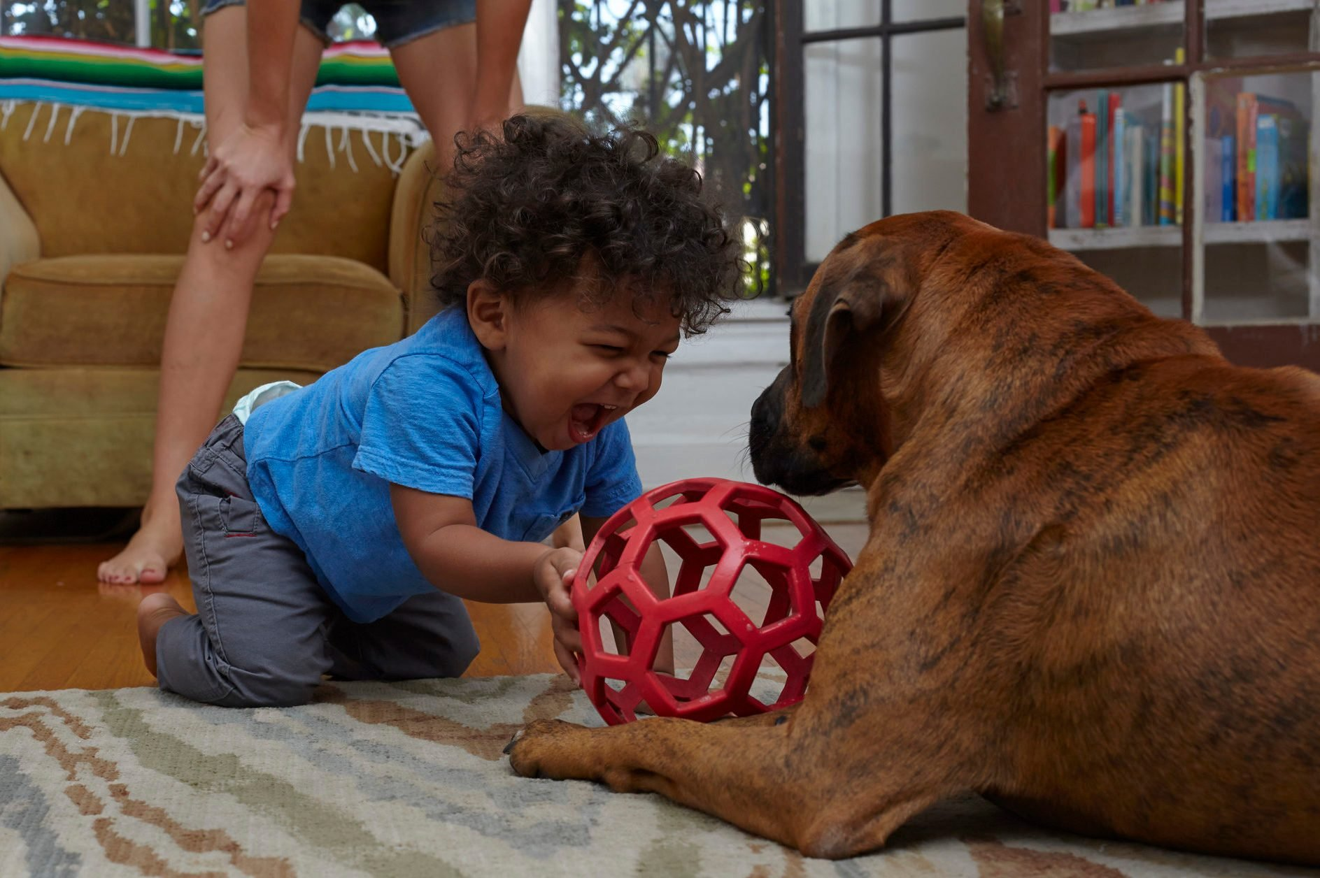 Male toddler playing with dog on sitting room floor