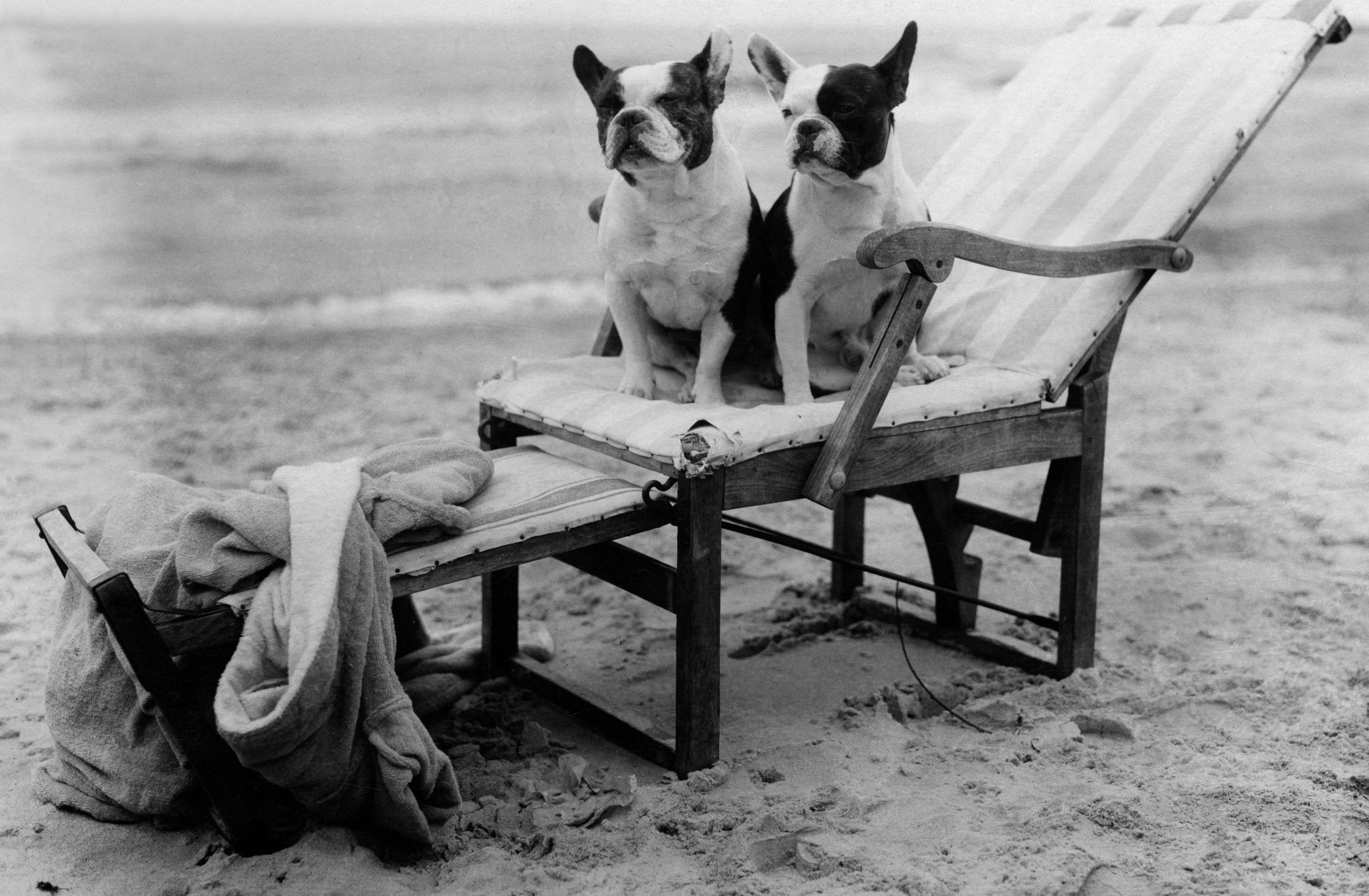 animals: two french bulldogs in a deck chair on the beach - 1922 - Photographer: Frankl - Published by: 'Die Dame' 20/1922 Vintage property of ullstein bild