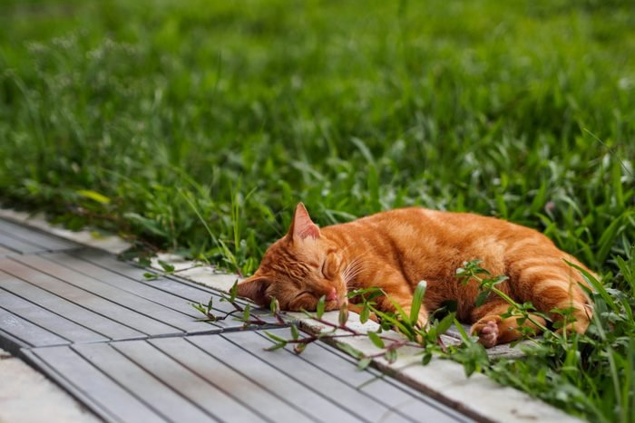 tabby kitten sleeping outside in grass