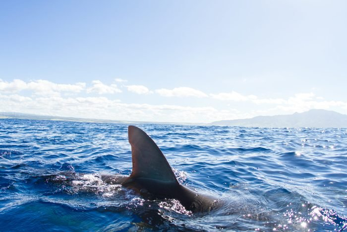Sharks swimming, fin out of water, Hawaii