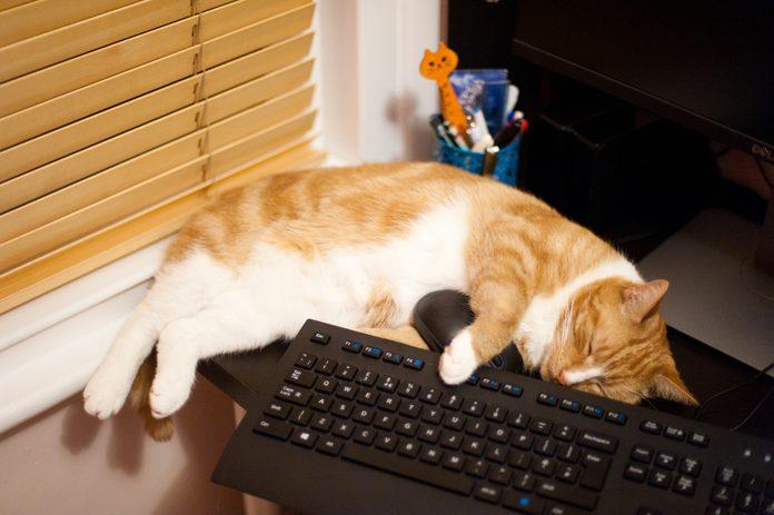 A ginger cat asleep across a keyboard