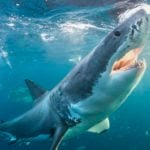 13 Things You Didn't Know About Shark Attacks