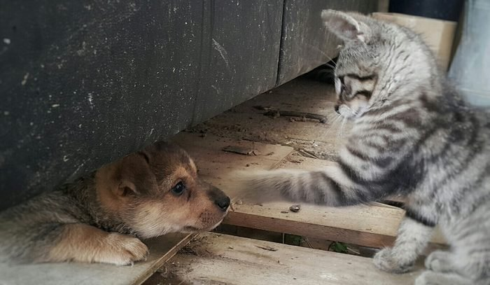 Playful Kitting With Puppy