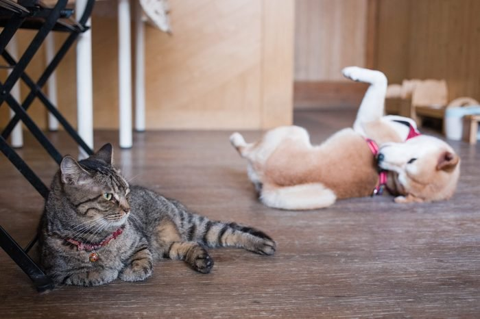 Cat And Dog Relaxing On Floor At Home