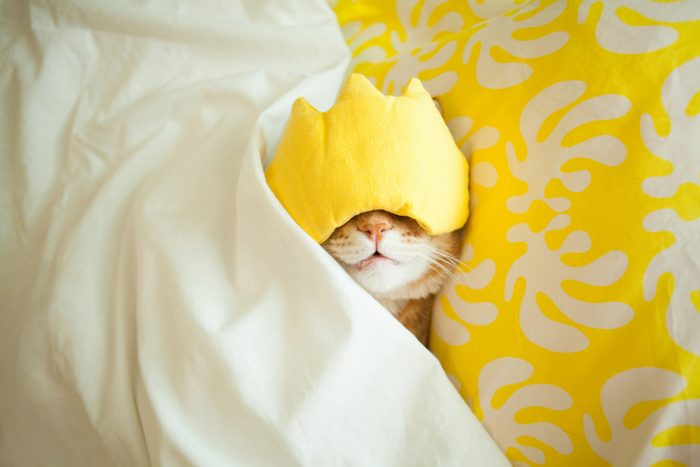 kitten sleeping with yellow eyecover