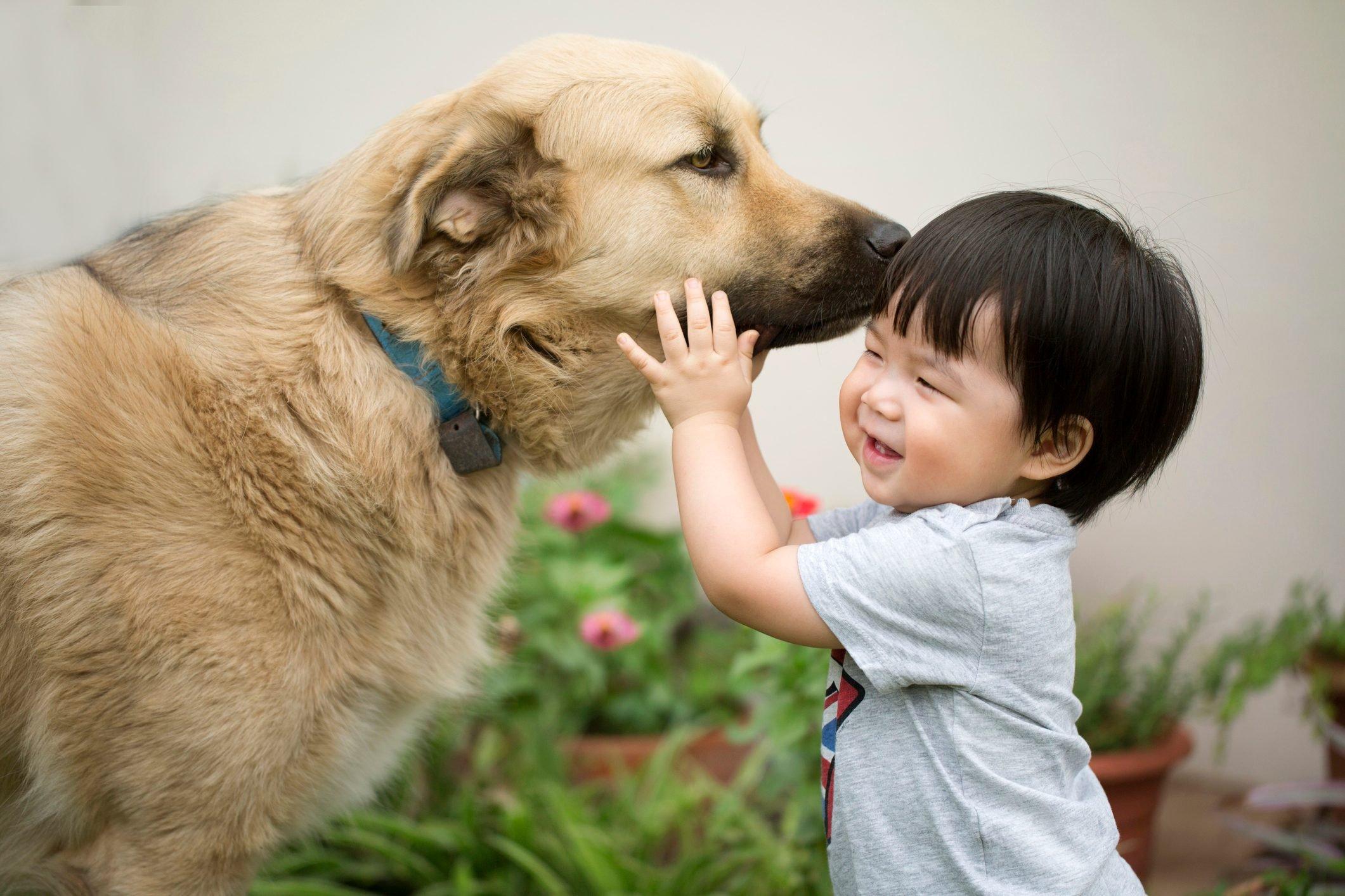 Asian toddler avoiding dog sniffing on him.