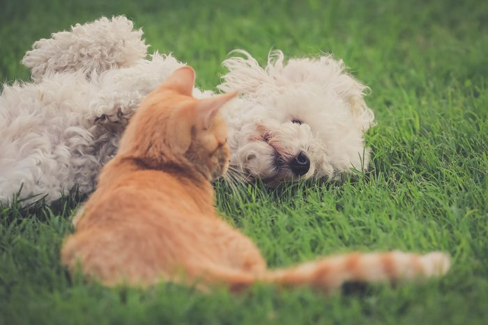 Cat And Dog On Field
