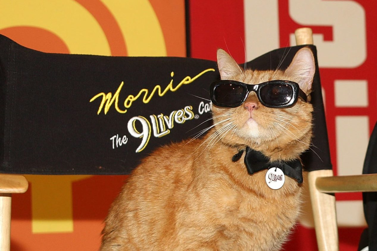 """9Lives Icon Morris The Cat On """"The Price Is Right"""" Set"""