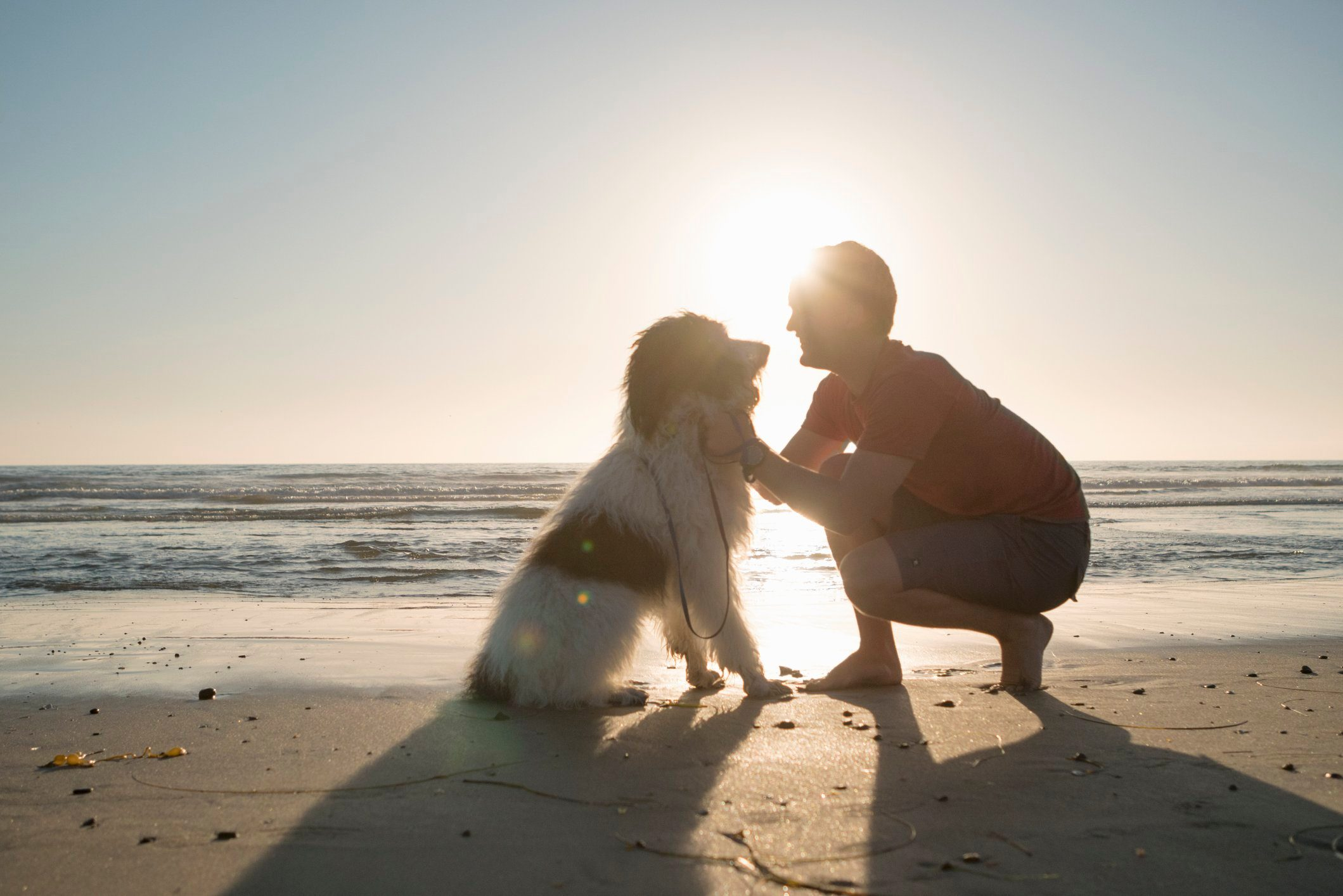 young man petting his dog on the beach at sunset