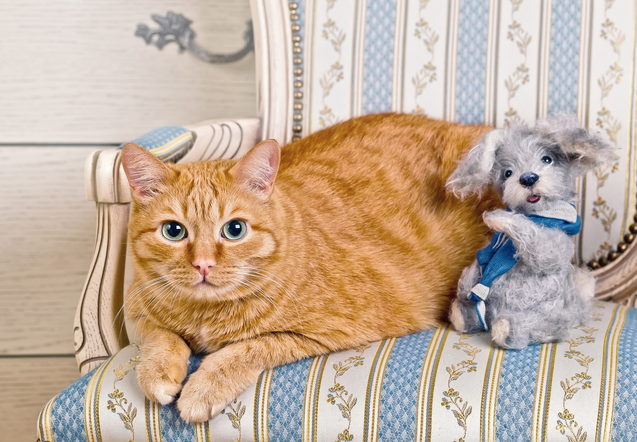 Ginger Cat with Toy Teddy Dog sitting on a striped chair