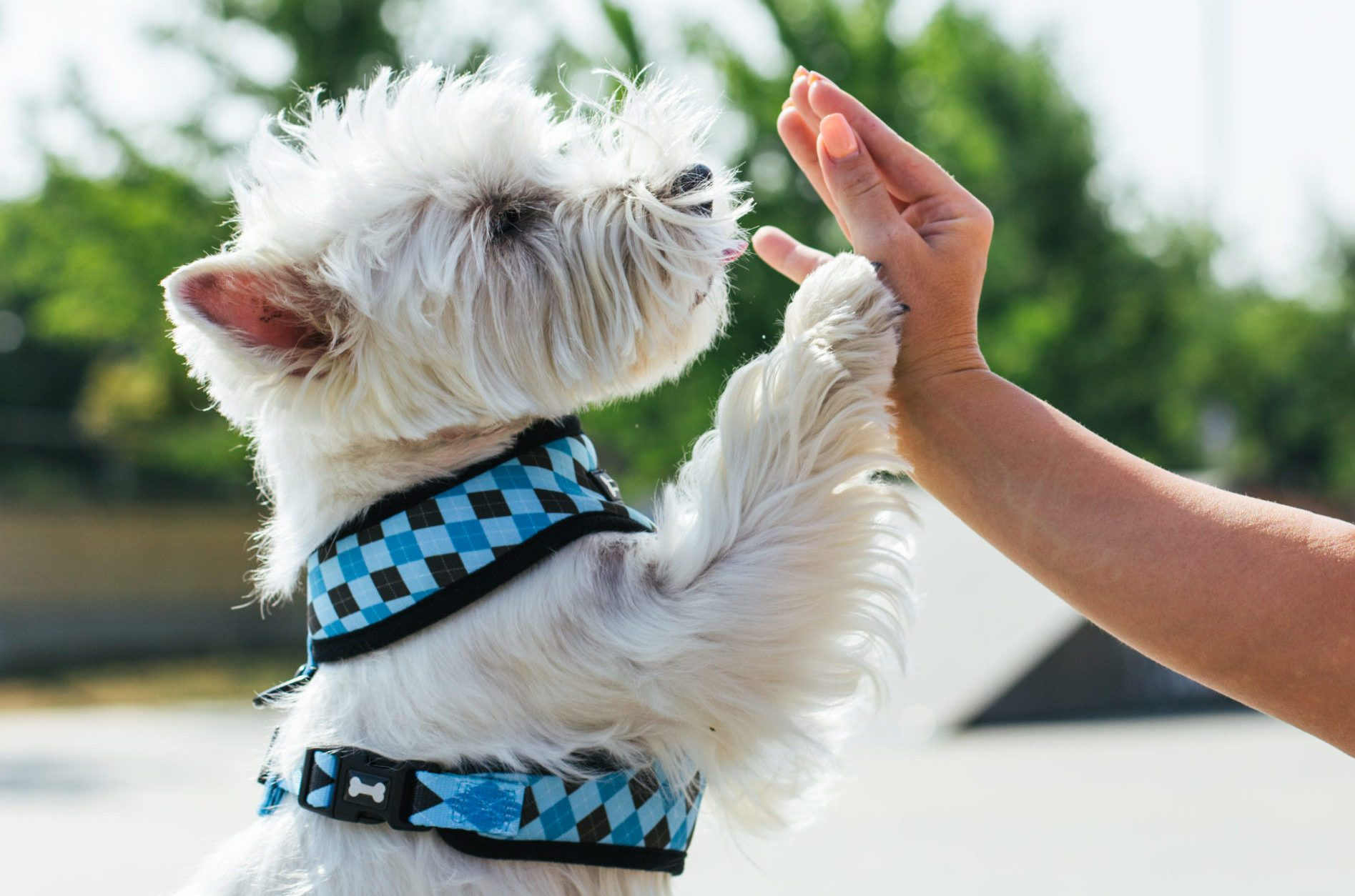 Dog give a high five to owner