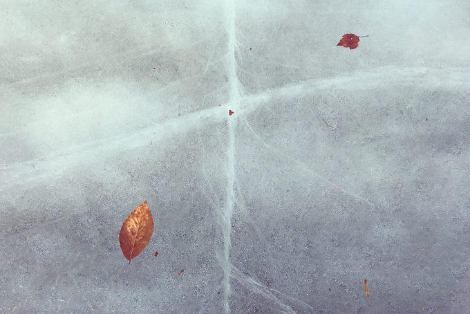 Winter Leaves in Frozen Lake