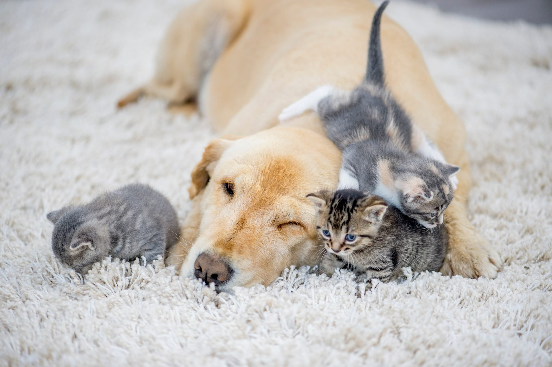 Kittens Playing With Dog