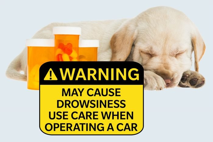 dog sleeping next to medicine bottles. warning: may cause drowsiness, use care when operating car.