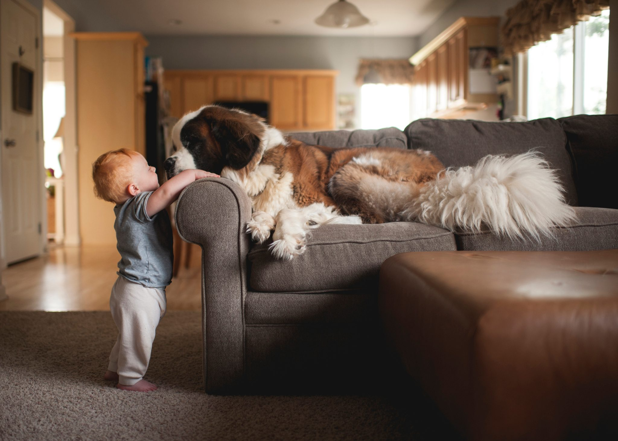 Side view of baby boy playing with dog lying on sofa at home