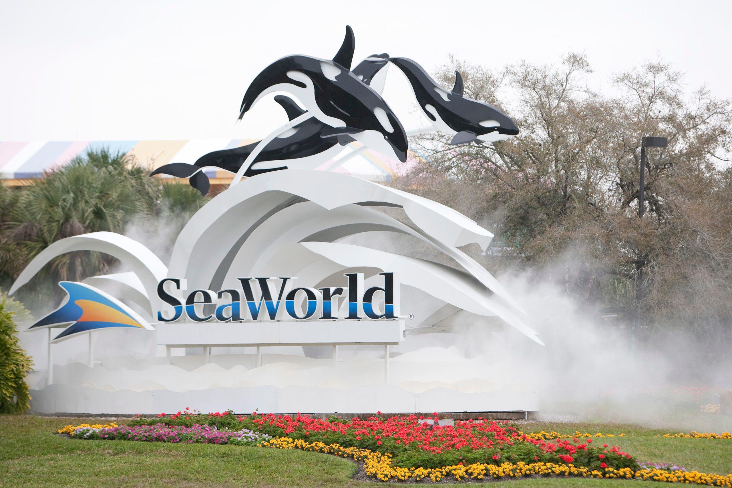 Killer Whale Kills Trainer Before Show At SeaWorld