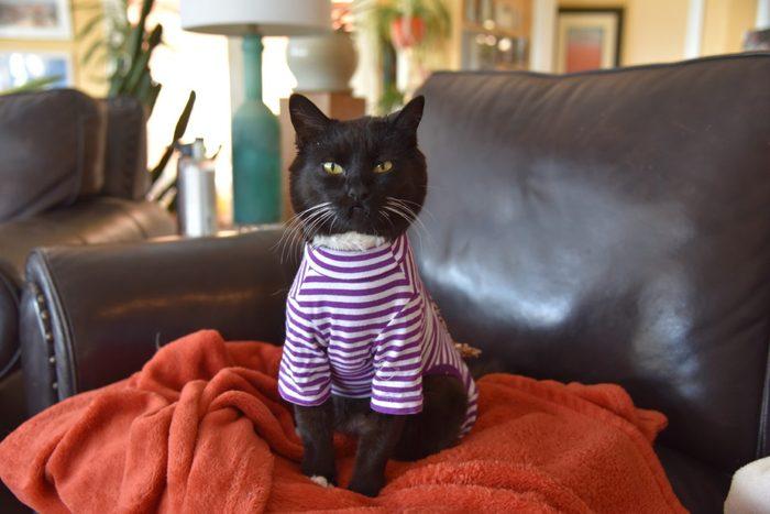 Best Friends Animal Society Hero cat adoption