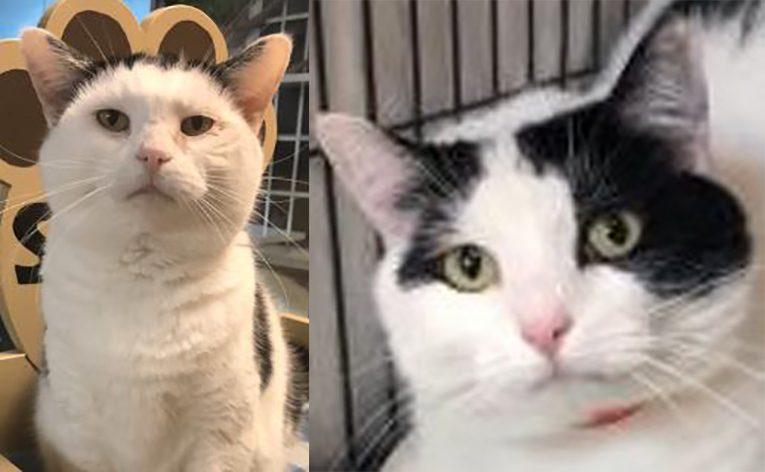 mama cat and baby cat