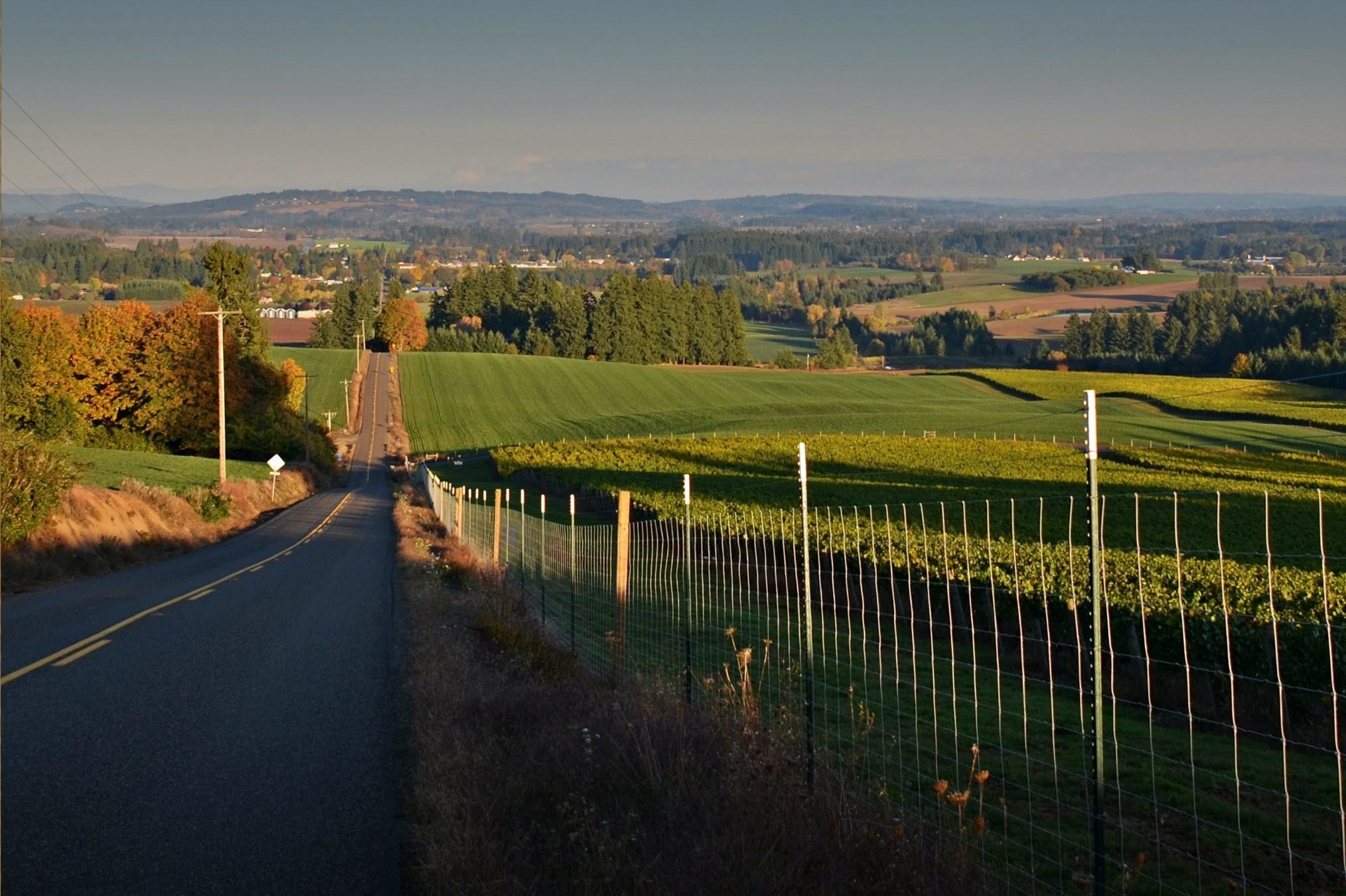 a country road in hillsboro oregon