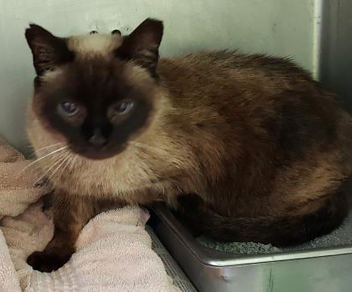 Squeak cat adoption Louisiana SPCA