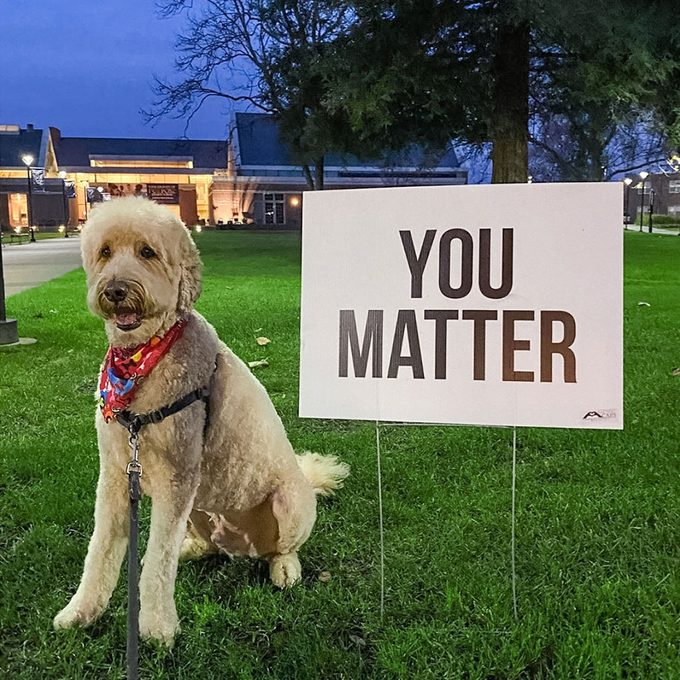 """a dog stands next to one of the Wolff's signs reading """"You Matter"""""""