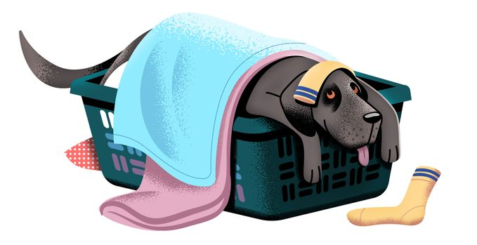 illustration. dog in the laundry basket.