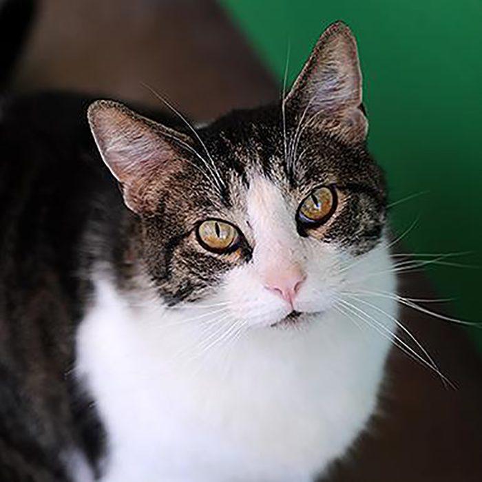 Best Friends Animal Society Abner cat adopt