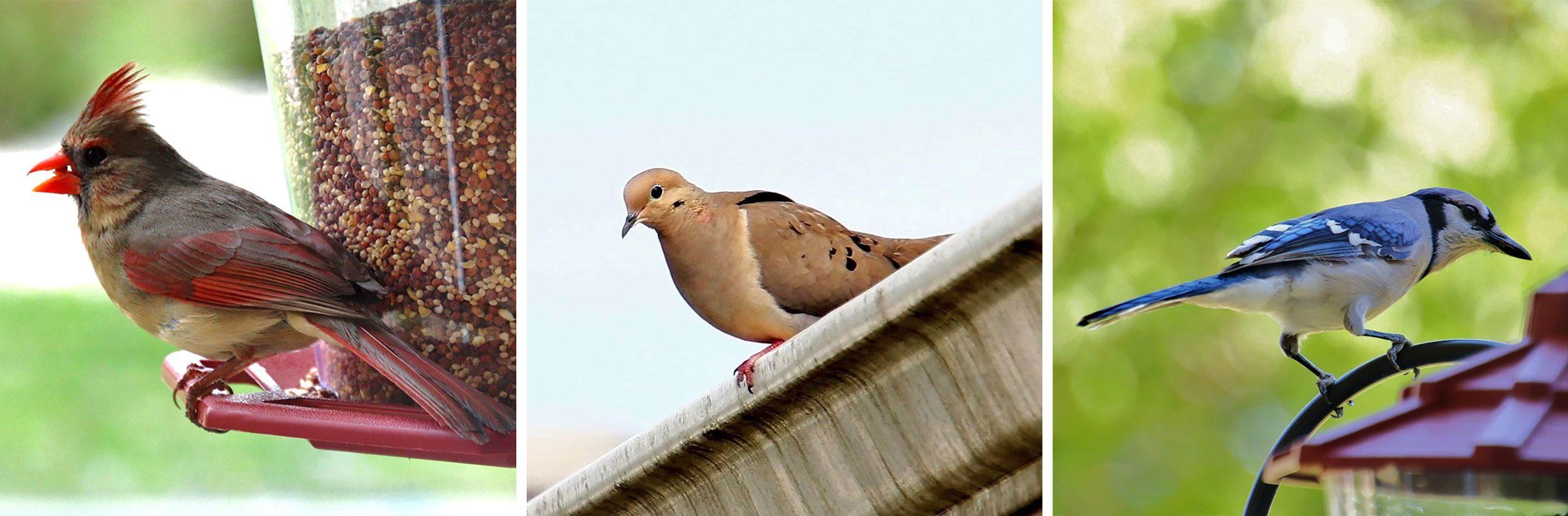 photos of birds by Joe Hall