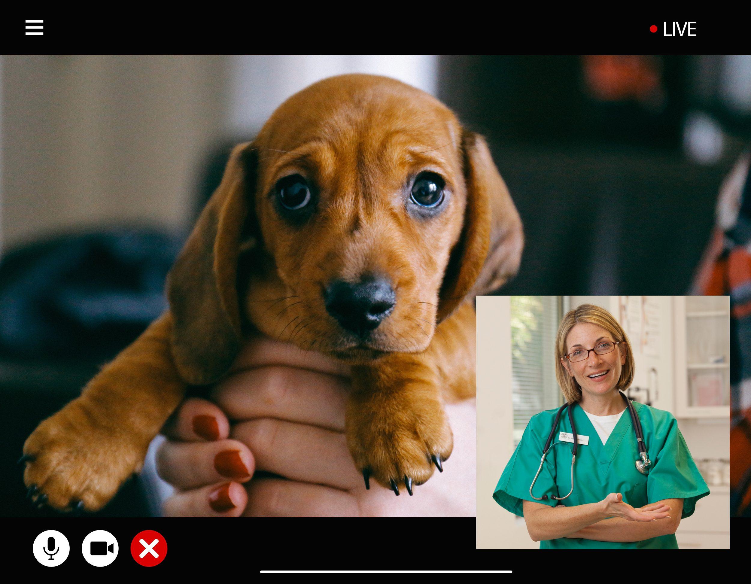 veterinarian vet televet telemedicine pets