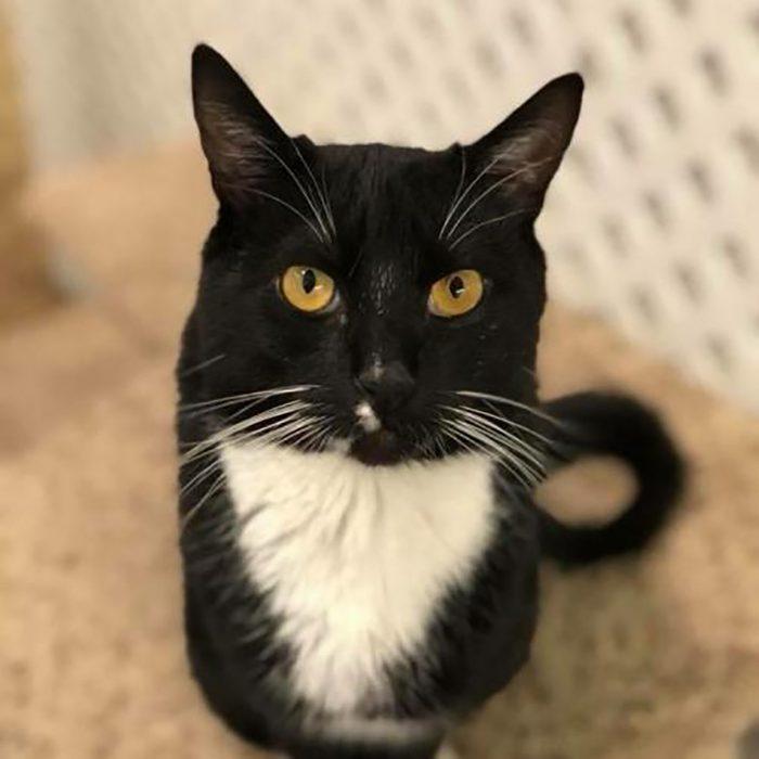 iggy cat adoption