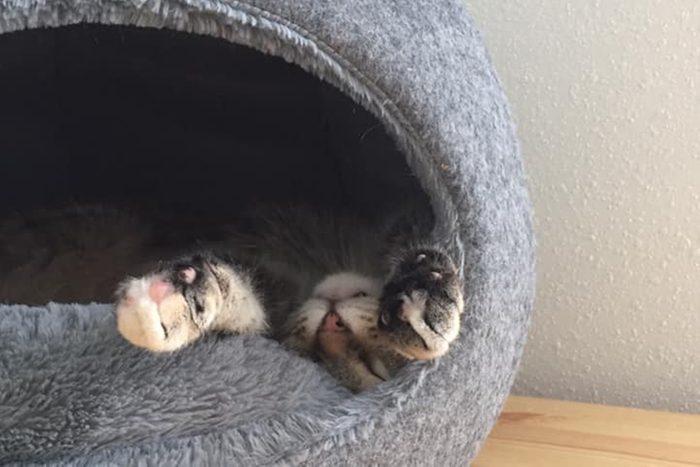Best Friends Animal Society May cat adoption