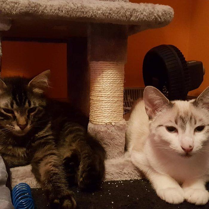 bat man and prince pounce a lot cat adoption
