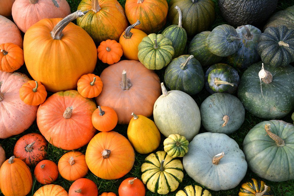 Colorful varieties of pumpkins and squashes. Color gradient background