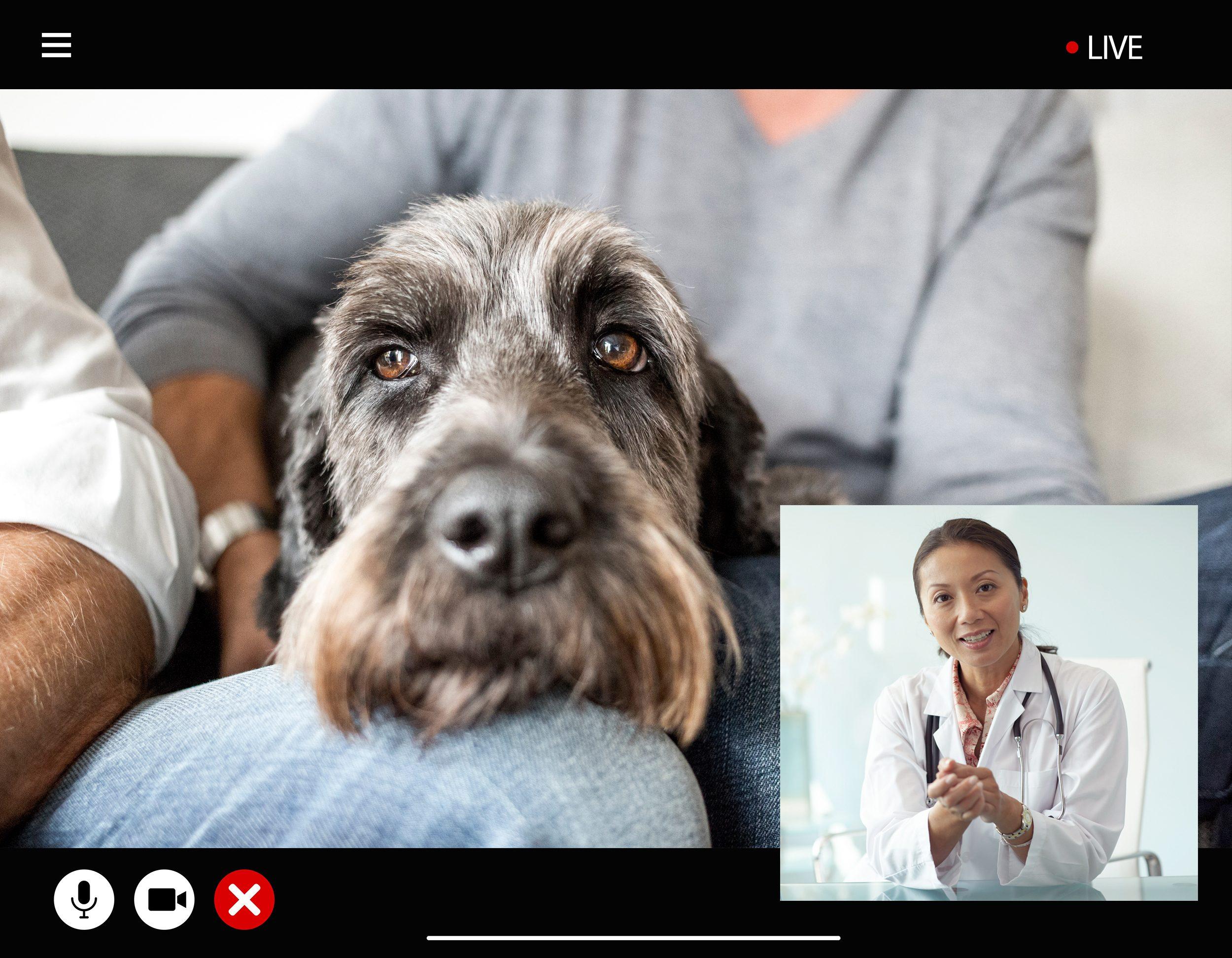 televet visit veterinarian telemedicine pets