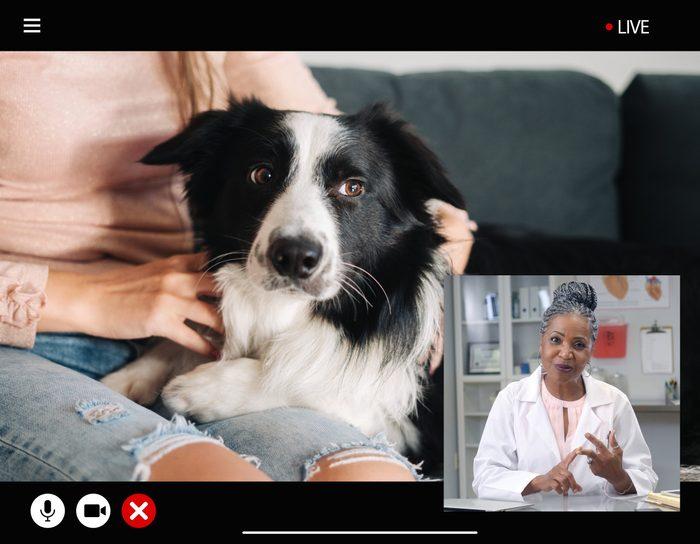 televet visit veterinarian telemedicine