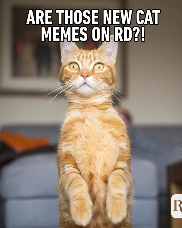 Are those new cat memes?