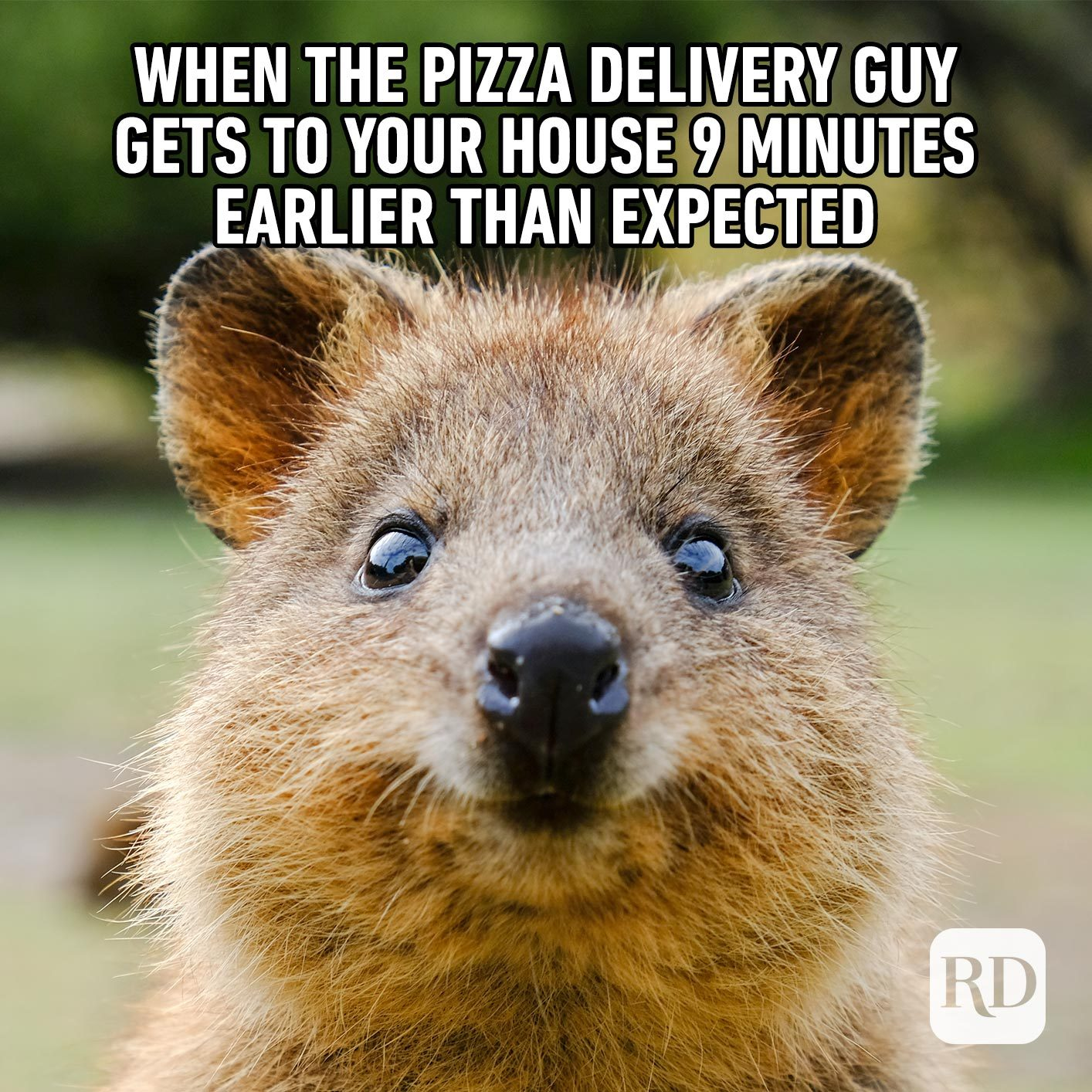 Pizza's here